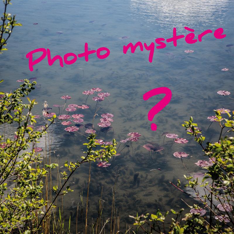 Jeu photo mystère Musée Vix